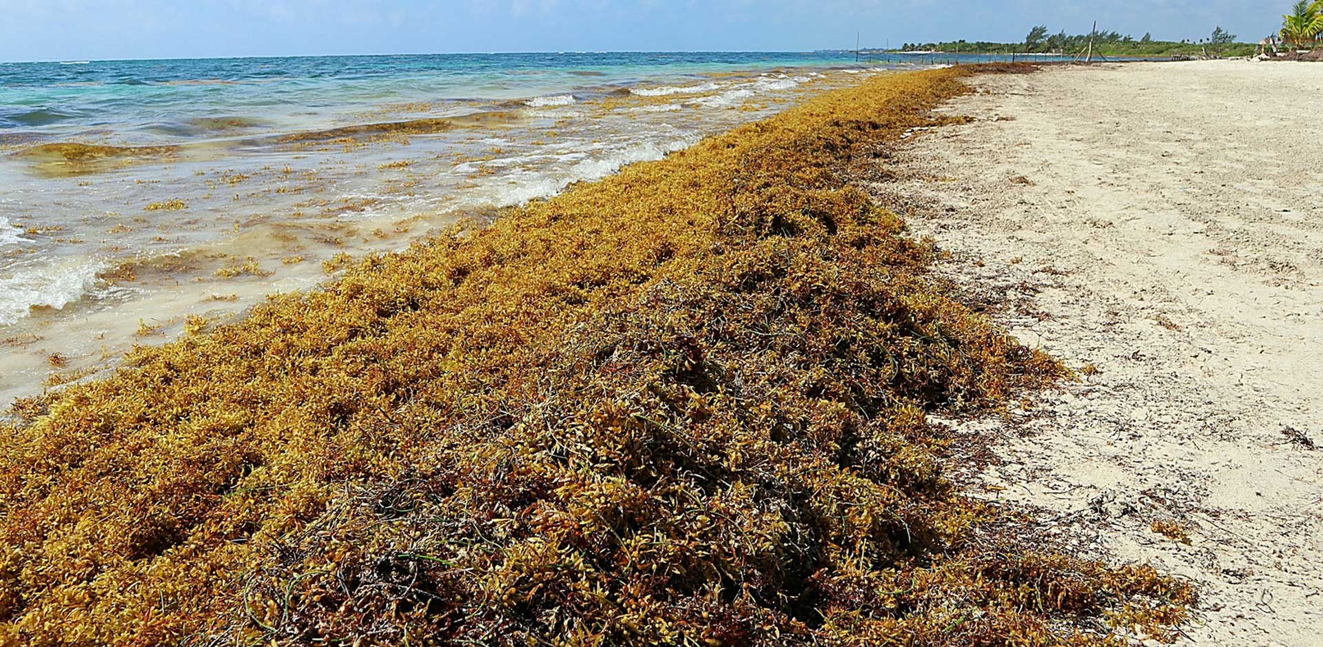 Sargassum Seaweed Prevention